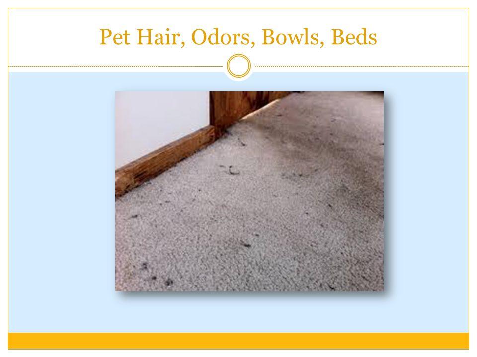Pet Hair, Odors, Bowls, Beds