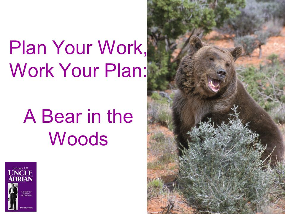 Plan Your Work, Work Your Plan: A Bear in the Woods