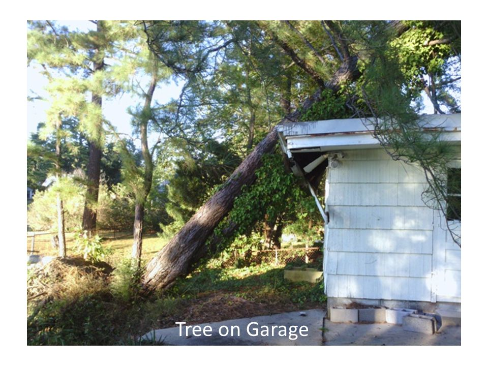 Tree on Garage