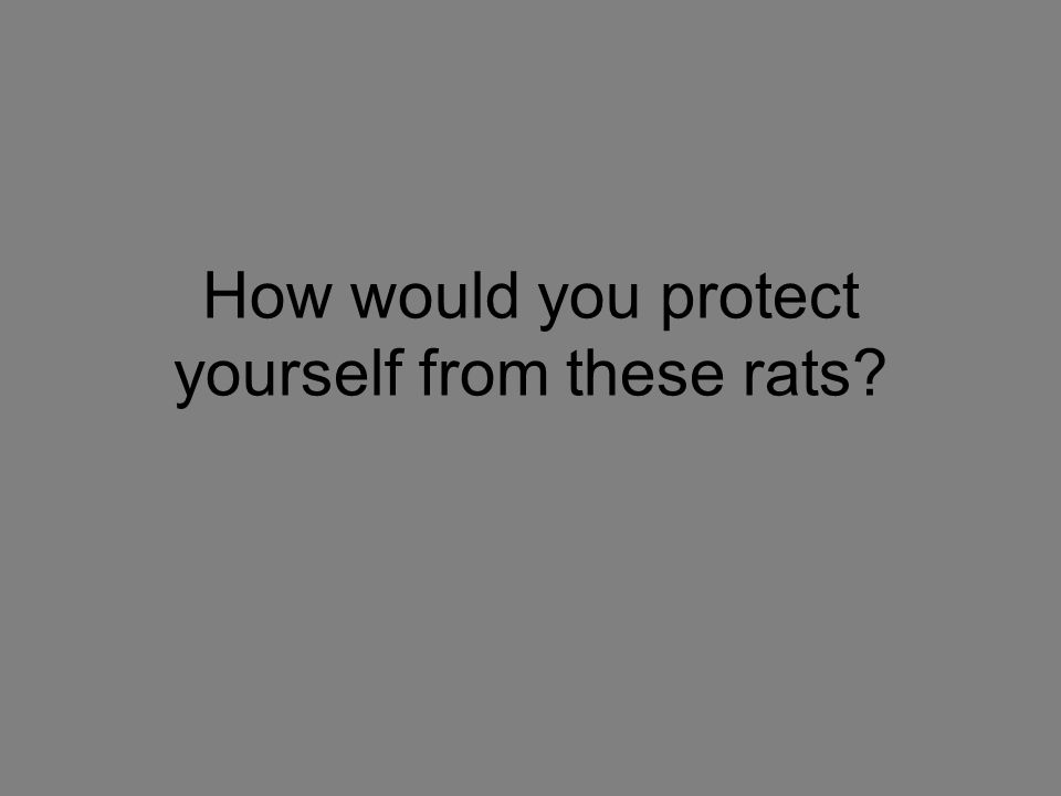 How would you protect yourself from these rats?