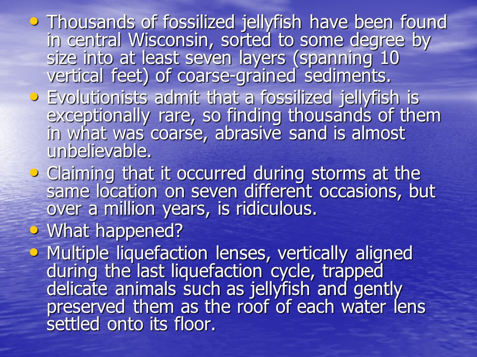 Thousands of fossilized jellyfish have been found in central Wisconsin, sorted to some degree by size into at least seven layers (spanning 10 vertical