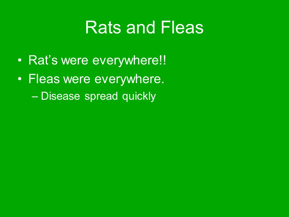 Rats and Fleas Rat's were everywhere!! Fleas were everywhere. –Disease spread quickly
