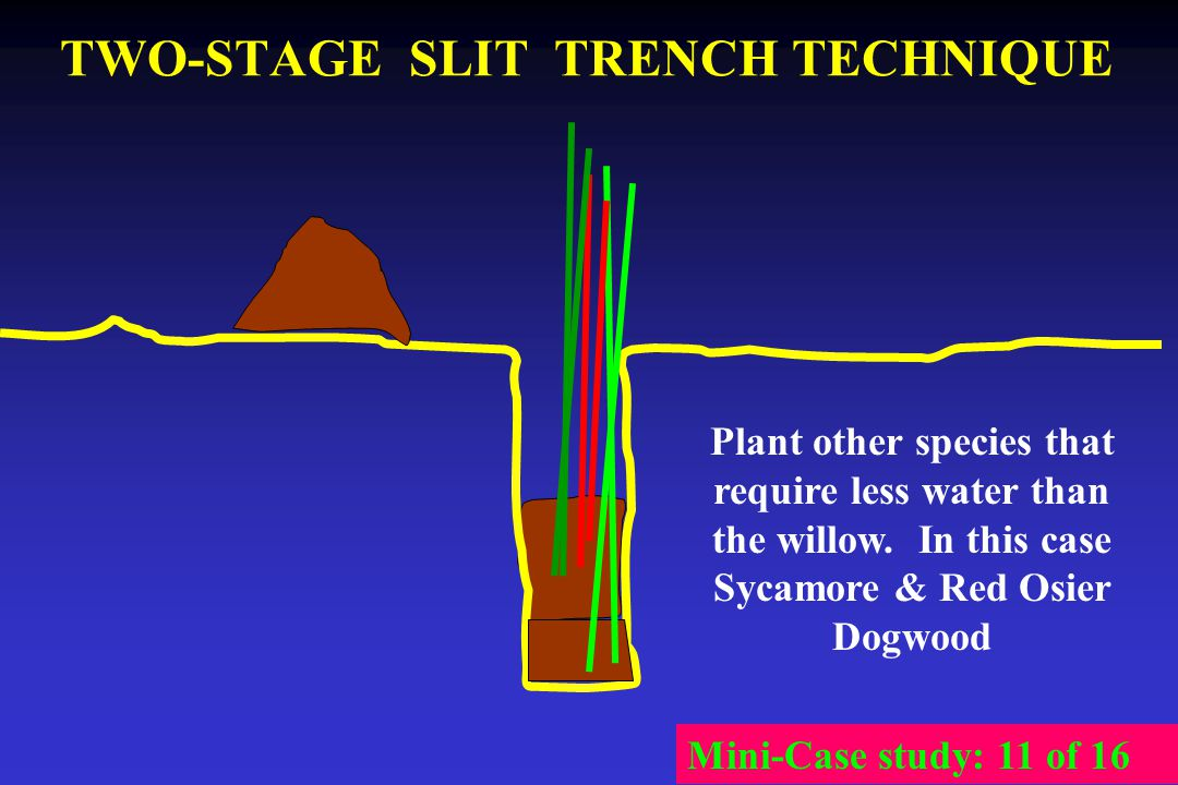 TWO-STAGE SLIT TRENCH TECHNIQUE Plant other species that require less water than the willow. In this case Sycamore & Red Osier Dogwood Mini-Case study