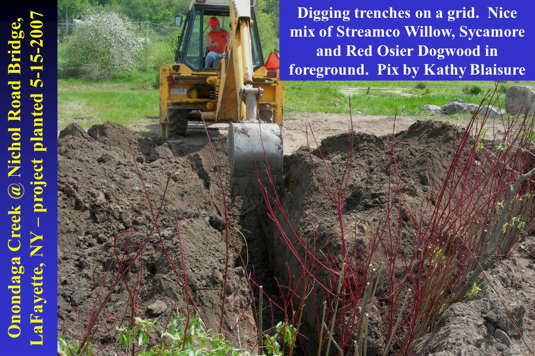Onondaga Creek @ Nichol Road Bridge, LaFayette, NY – project planted 5-15-2007 Digging trenches on a grid. Nice mix of Streamco Willow, Sycamore and R