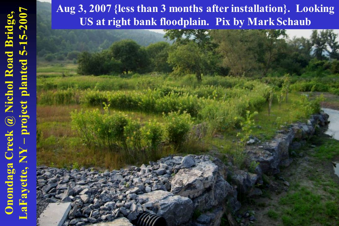 Onondaga Creek @ Nichol Road Bridge, LaFayette, NY – project planted 5-15-2007 Aug 3, 2007 {less than 3 months after installation}. Looking US at righ
