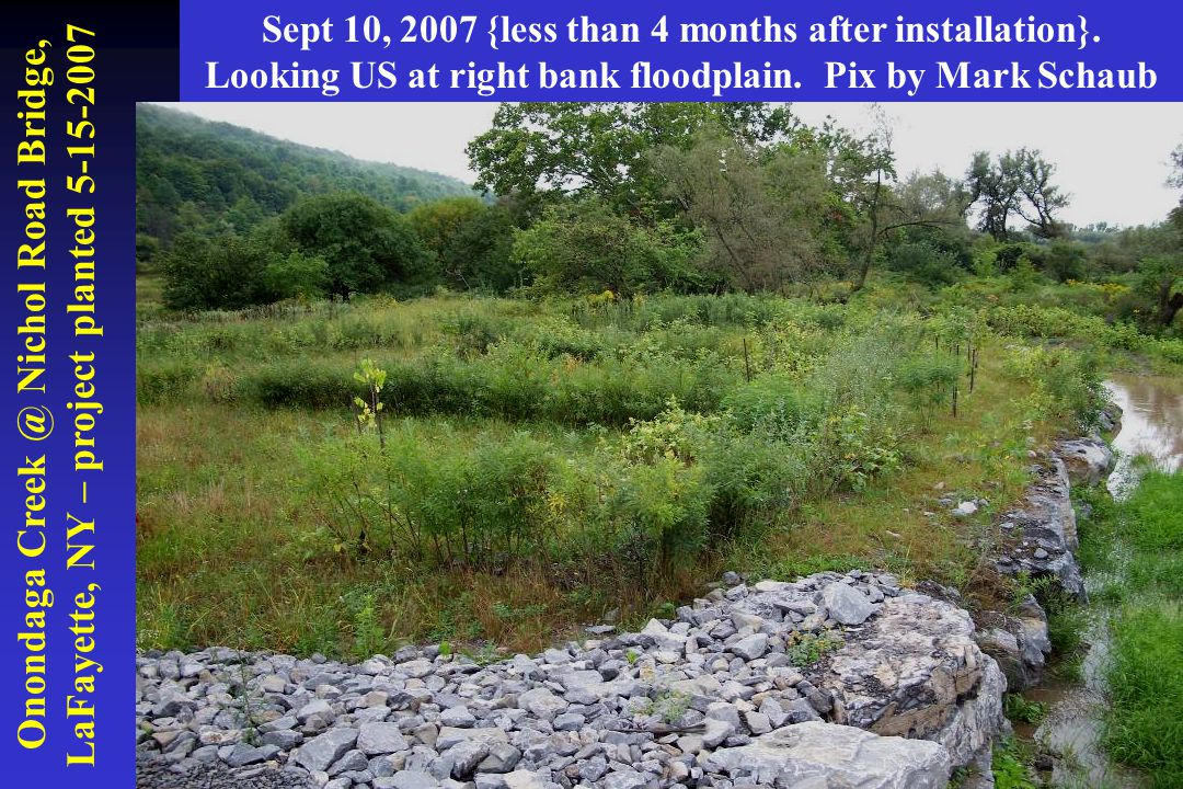 Onondaga Creek @ Nichol Road Bridge, LaFayette, NY – project planted 5-15-2007 Sept 10, 2007 {less than 4 months after installation}. Looking US at ri