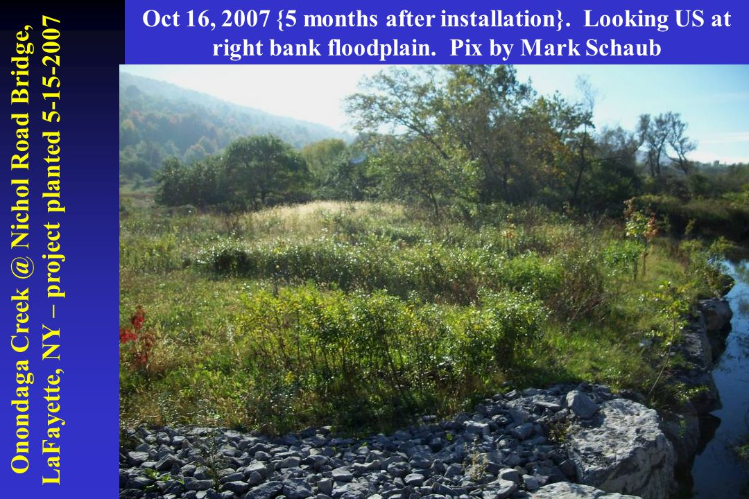 Onondaga Creek @ Nichol Road Bridge, LaFayette, NY – project planted 5-15-2007 Oct 16, 2007 {5 months after installation}. Looking US at right bank fl