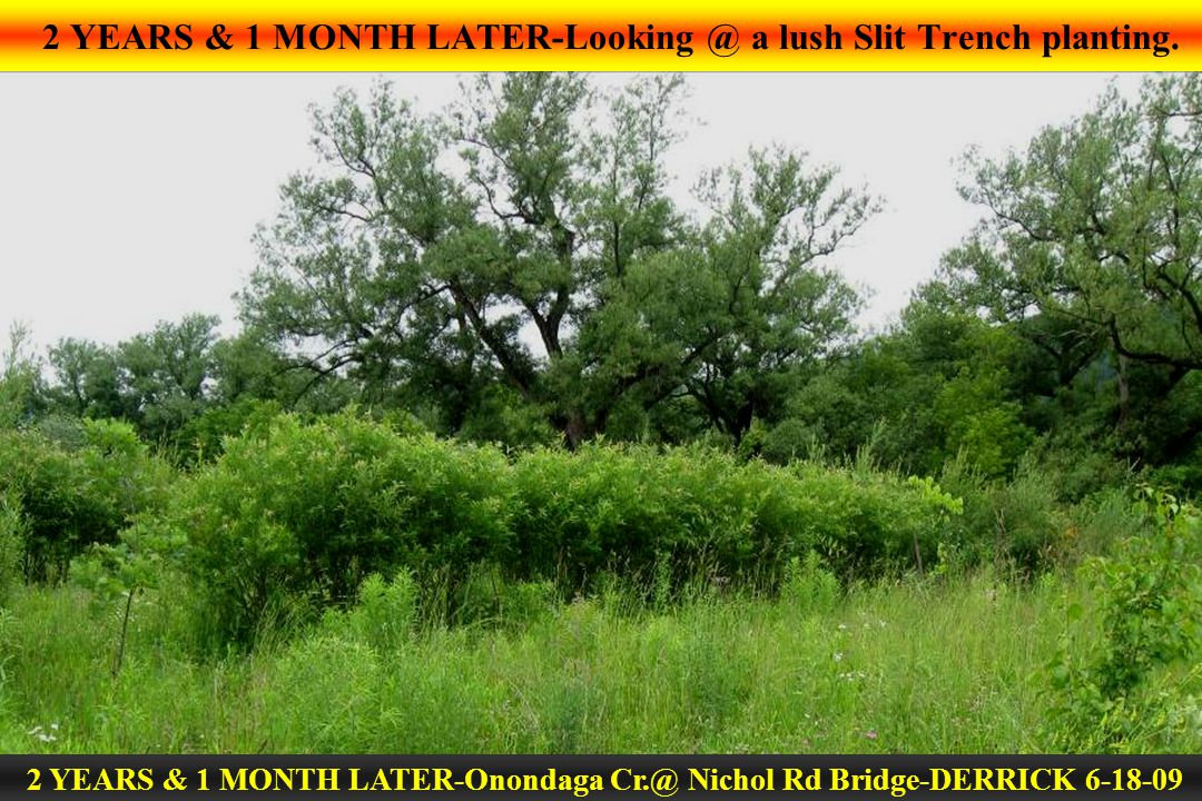 2 YEARS & 1 MONTH LATER-Looking @ a lush Slit Trench planting. 2 YEARS & 1 MONTH LATER-Onondaga Cr.@ Nichol Rd Bridge-DERRICK 6-18-09