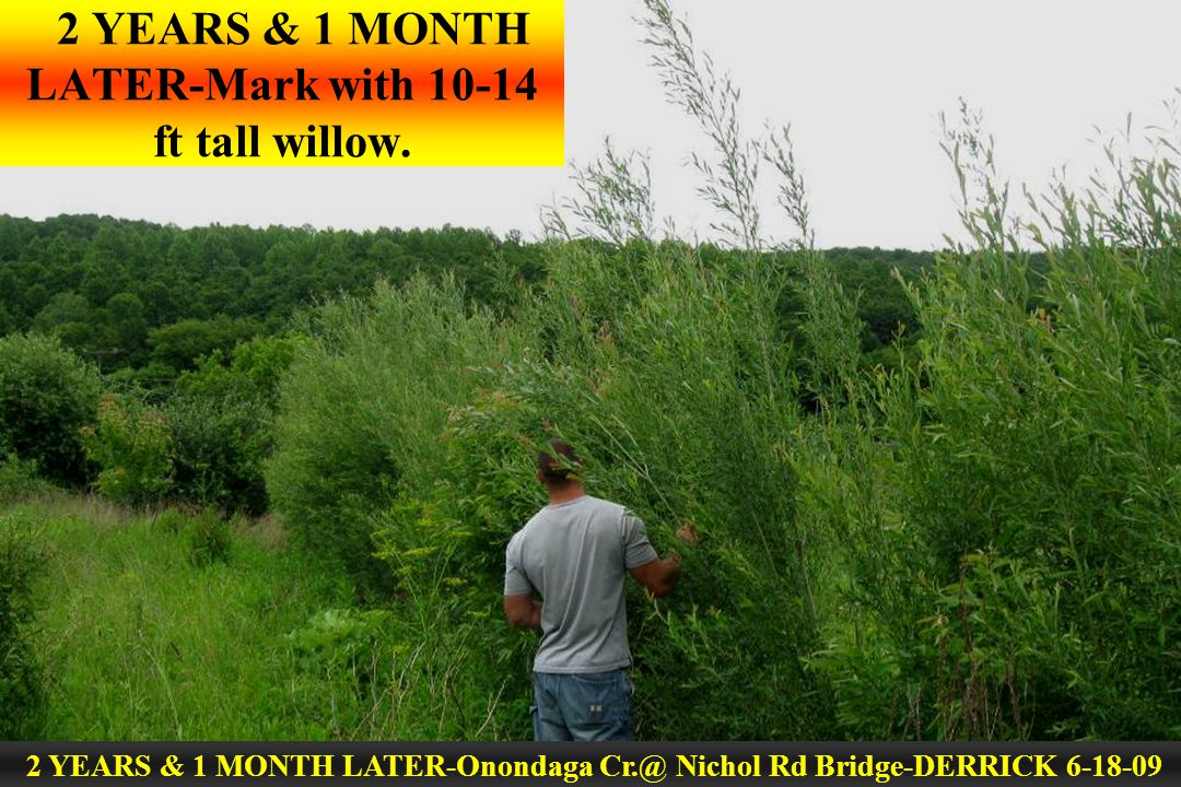 2 YEARS & 1 MONTH LATER-Mark with 10-14 ft tall willow. 2 YEARS & 1 MONTH LATER-Onondaga Cr.@ Nichol Rd Bridge-DERRICK 6-18-09