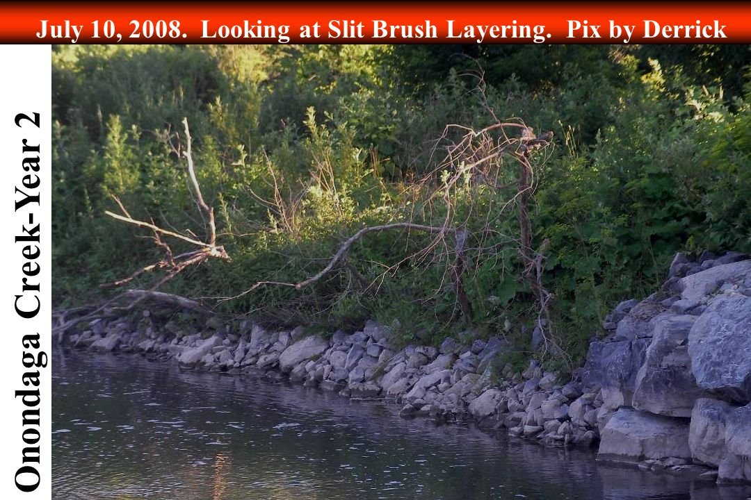 Onondaga Creek-Year 2 July 10, 2008. Looking at Slit Brush Layering. Pix by Derrick