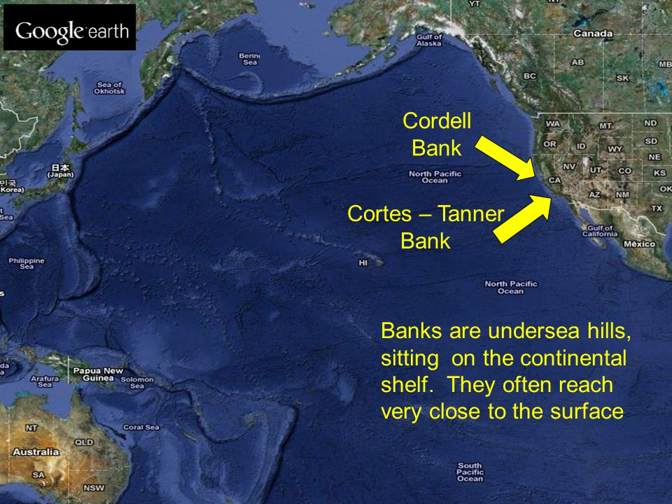 Cortes – Tanner Bank Banks are undersea hills, sitting on the continental shelf. They often reach very close to the surface Cordell Bank