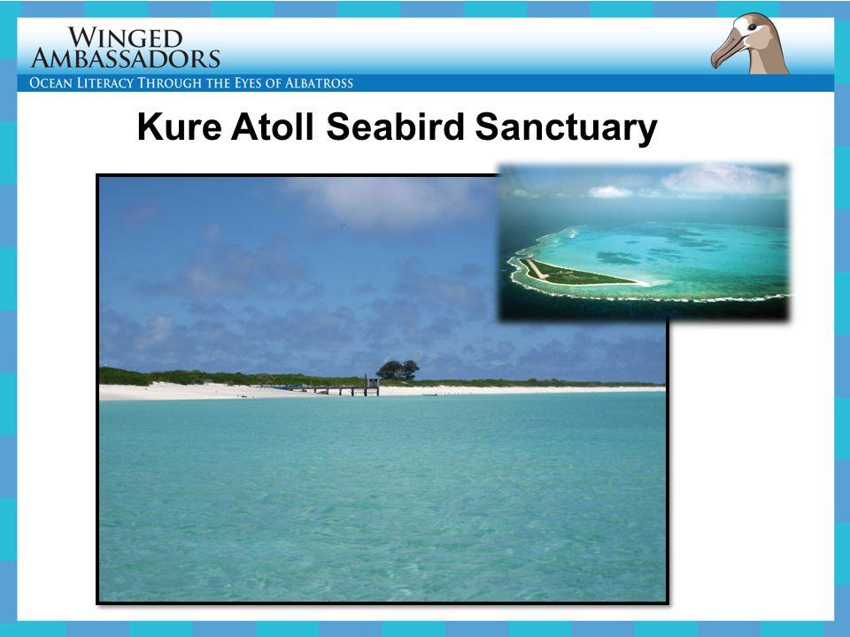 Kure Atoll Seabird Sanctuary