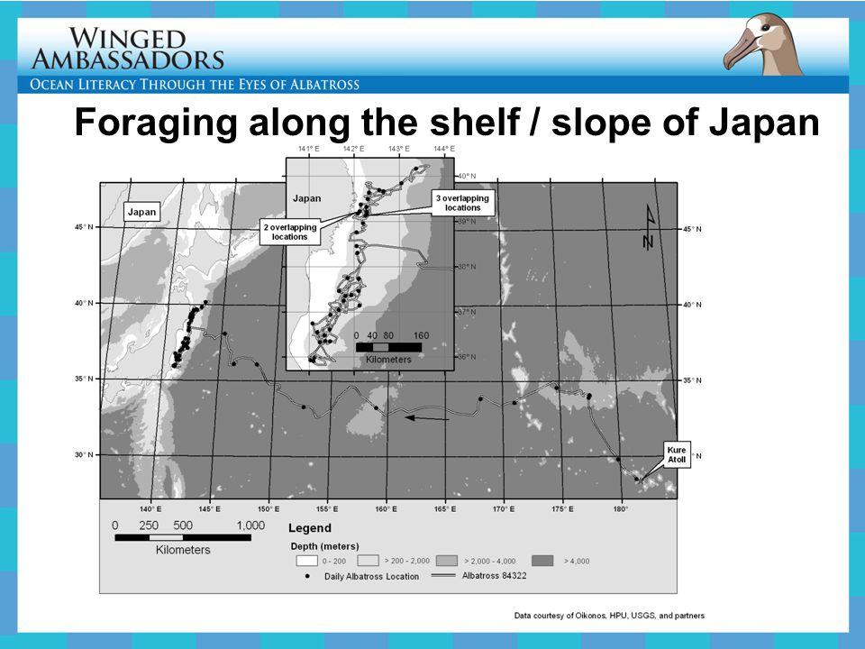 Foraging along the shelf / slope of Japan