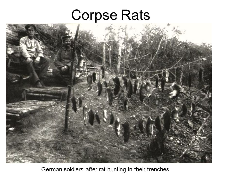 Corpse Rats German soldiers after rat hunting in their trenches