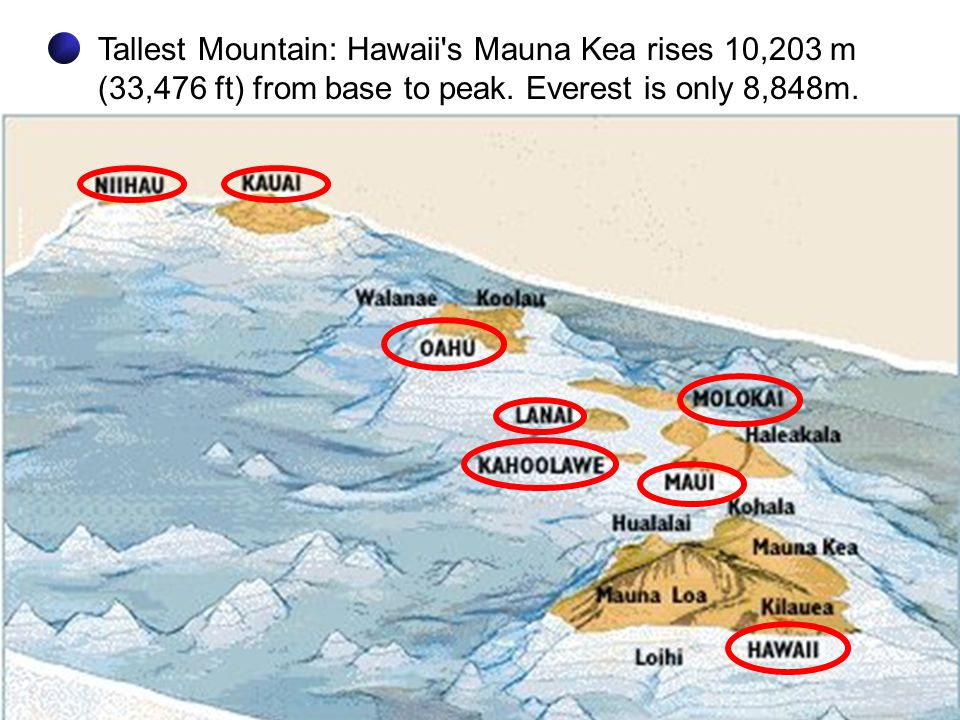 Tallest Mountain: Hawaii's Mauna Kea rises 10,203 m (33,476 ft) from base to peak. Everest is only 8,848m.