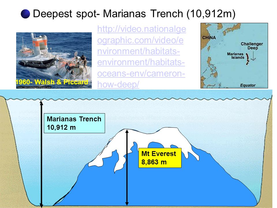 Deepest spot- Marianas Trench (10,912m) 1960- Walsh & Piccard Marianas Trench 10,912 m Mt Everest 8,863 m http://video.nationalge ographic.com/video/e