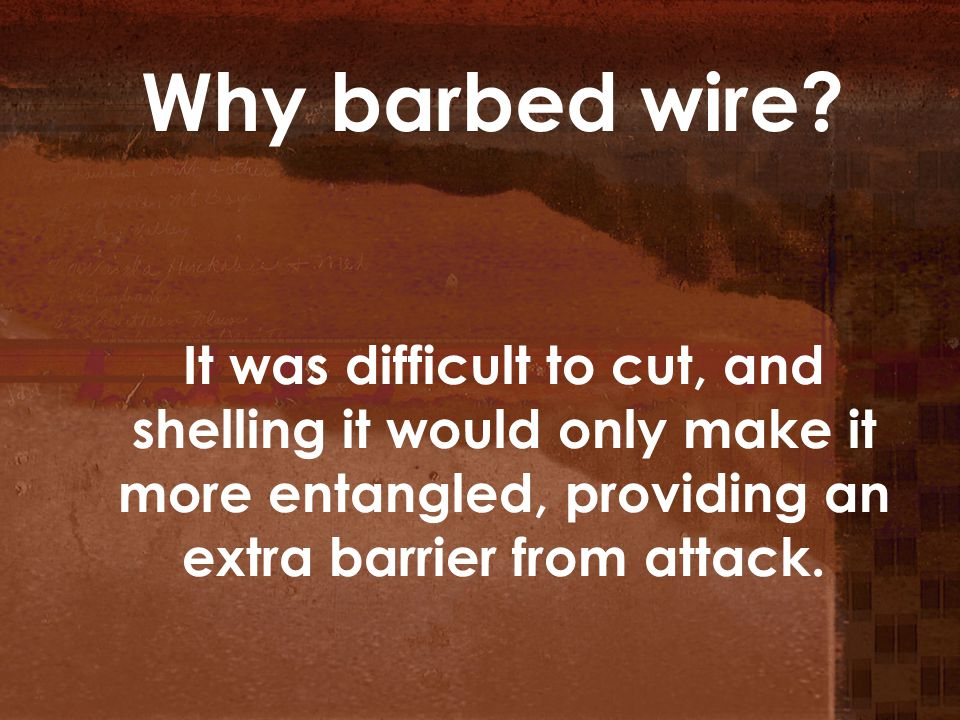 Why barbed wire? It was difficult to cut, and shelling it would only make it more entangled, providing an extra barrier from attack.