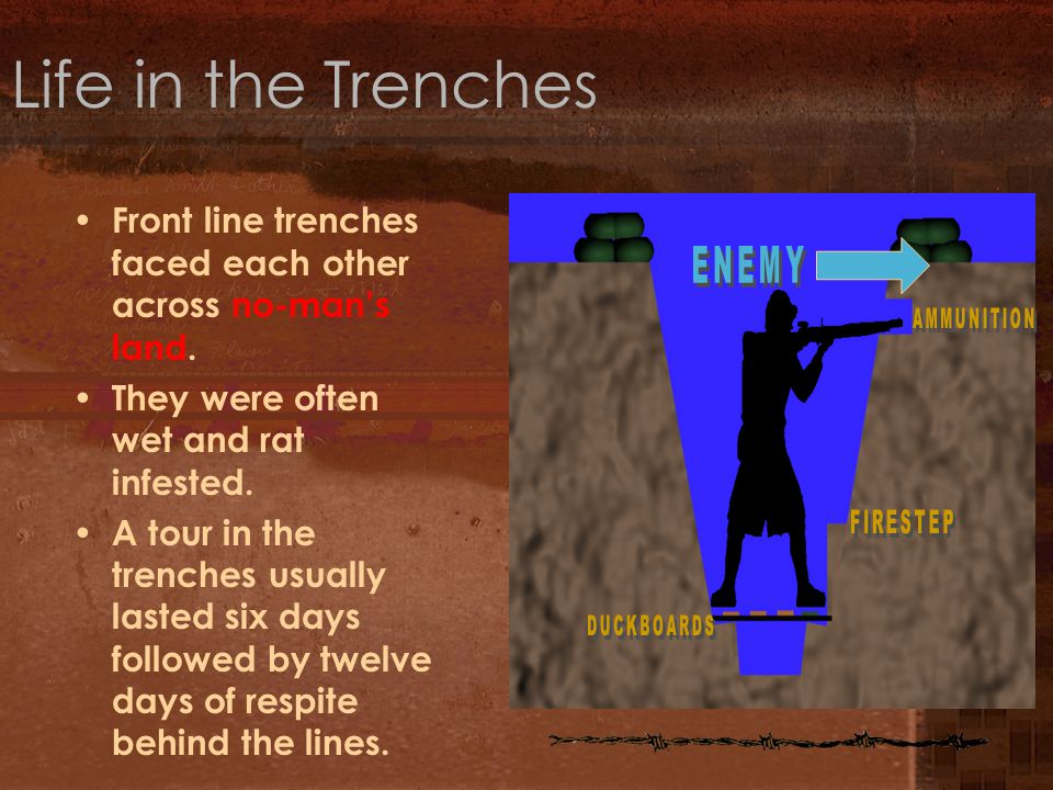 Life in the Trenches Front line trenches faced each other across no-man's land. They were often wet and rat infested. A tour in the trenches usually l