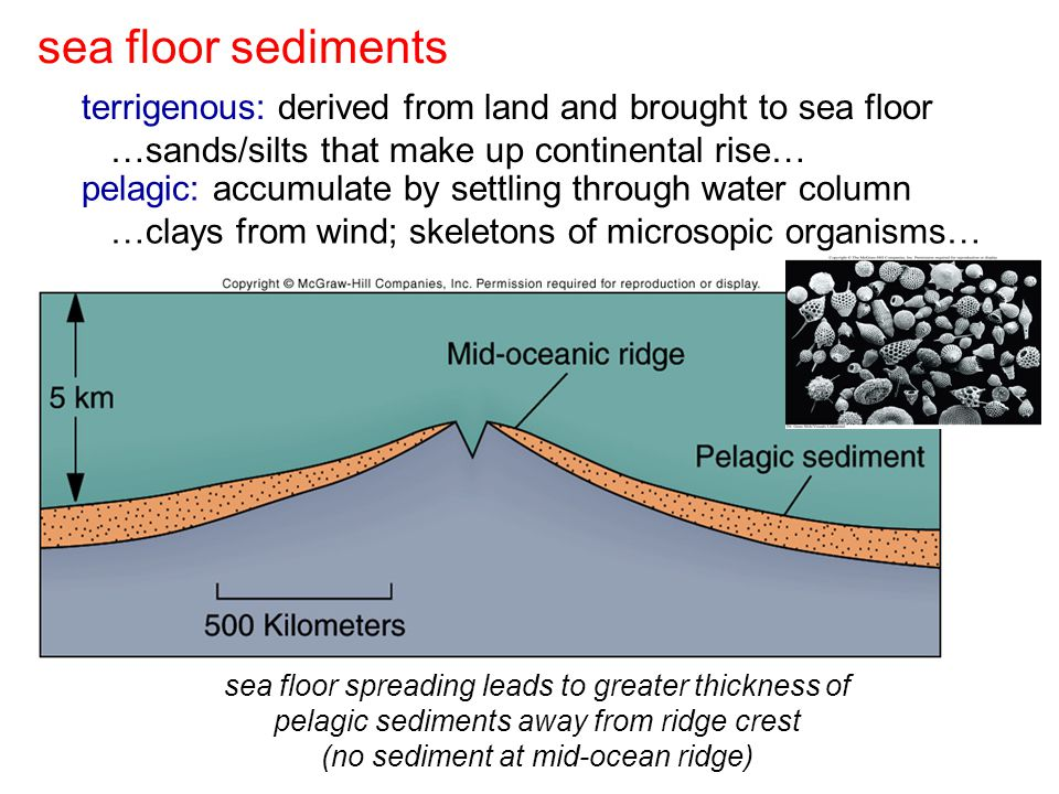pelagic: accumulate by settling through water column …clays from wind; skeletons of microsopic organisms… sea floor spreading leads to greater thickness of pelagic sediments away from ridge crest (no sediment at mid-ocean ridge) sea floor sediments terrigenous: derived from land and brought to sea floor …sands/silts that make up continental rise…