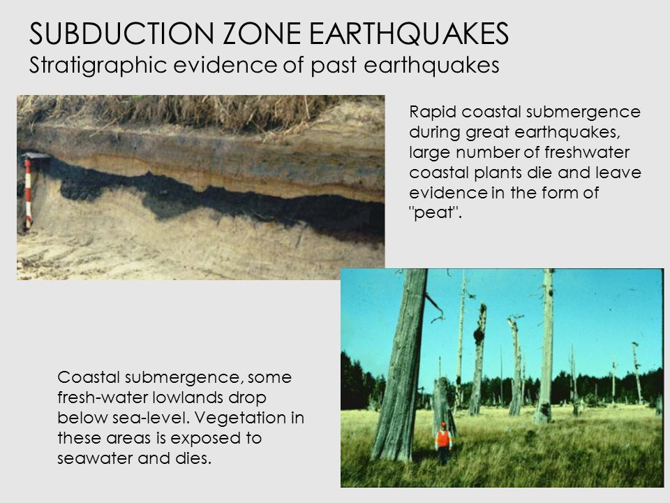 SUBDUCTION ZONE EARTHQUAKES Stratigraphic evidence of past earthquakes Coastal submergence, some fresh-water lowlands drop below sea-level.