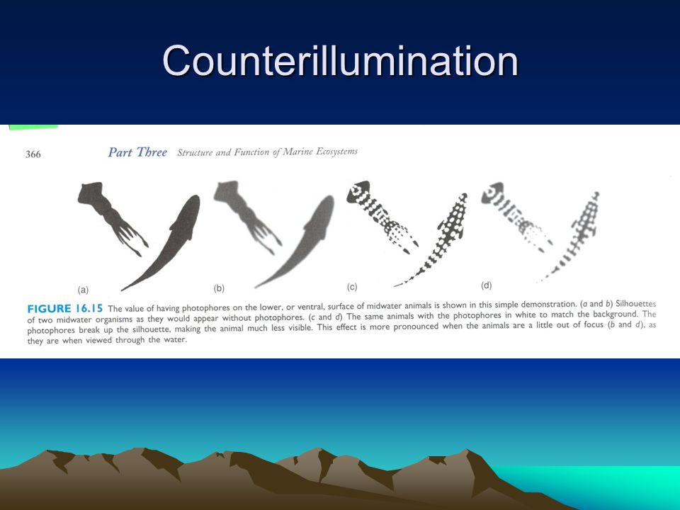 Counterillumination