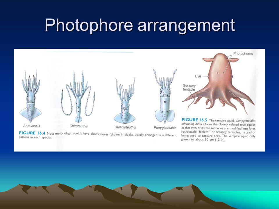 Photophore arrangement