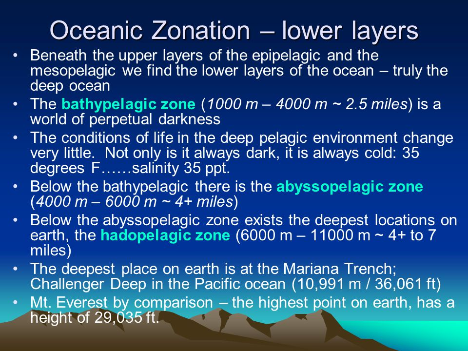 Beneath the upper layers of the epipelagic and the mesopelagic we find the lower layers of the ocean – truly the deep ocean The bathypelagic zone (100