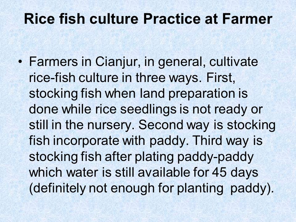 Rice fish culture Practice at Farmer Farmers in Cianjur, in general, cultivate rice-fish culture in three ways. First, stocking fish when land prepara