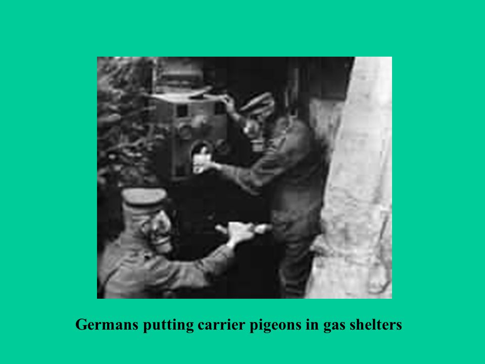 Germans putting carrier pigeons in gas shelters