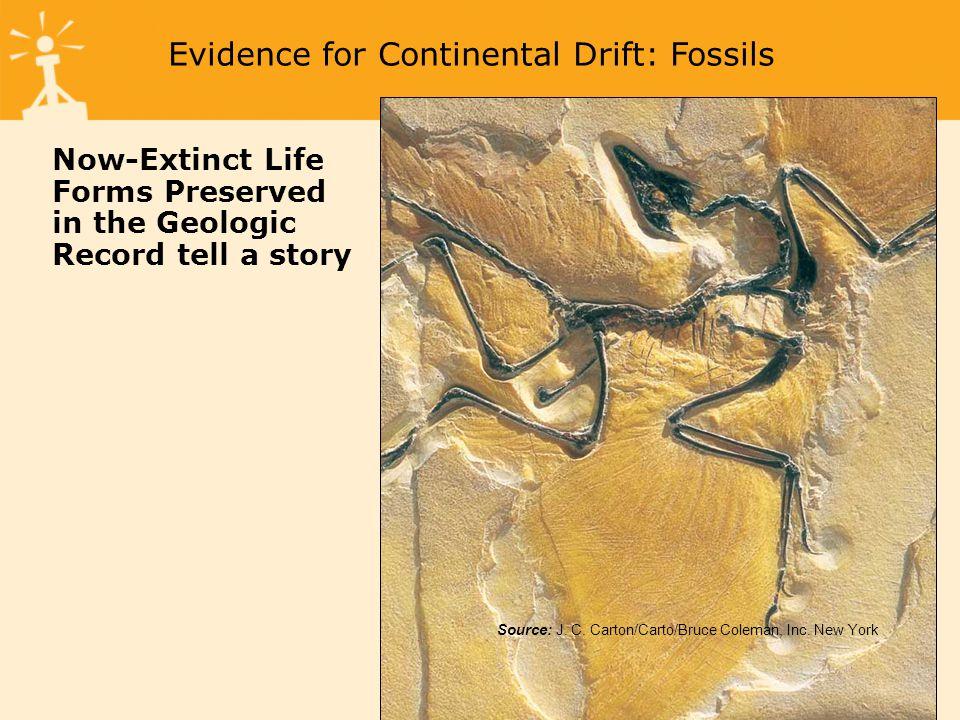 Source: William E. Ferguson Evidence for Continental Drift: Rock Record
