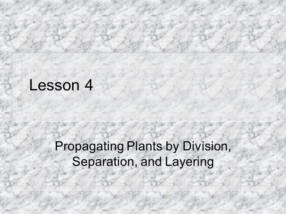 Lesson 4 Propagating Plants by Division, Separation, and Layering