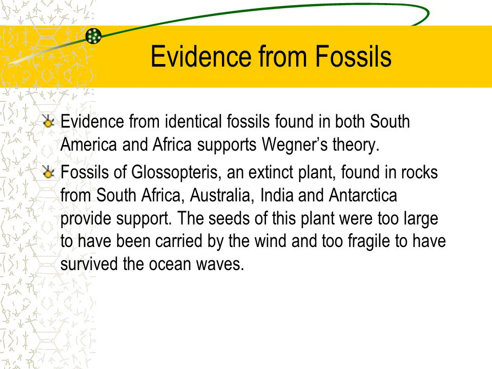Evidence from Fossils Evidence from identical fossils found in both South America and Africa supports Wegner's theory. Fossils of Glossopteris, an ext