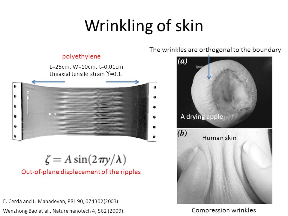 Wrinkling of skin E. Cerda and L.