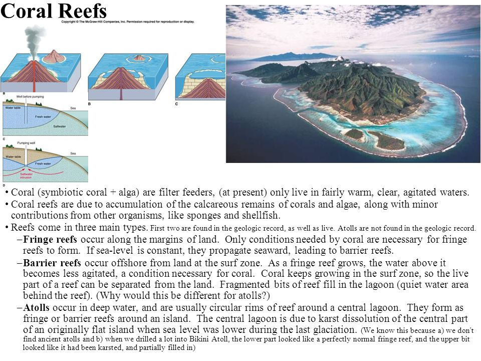 Coral Reefs Coral (symbiotic coral + alga) are filter feeders, (at present) only live in fairly warm, clear, agitated waters. Coral reefs are due to a