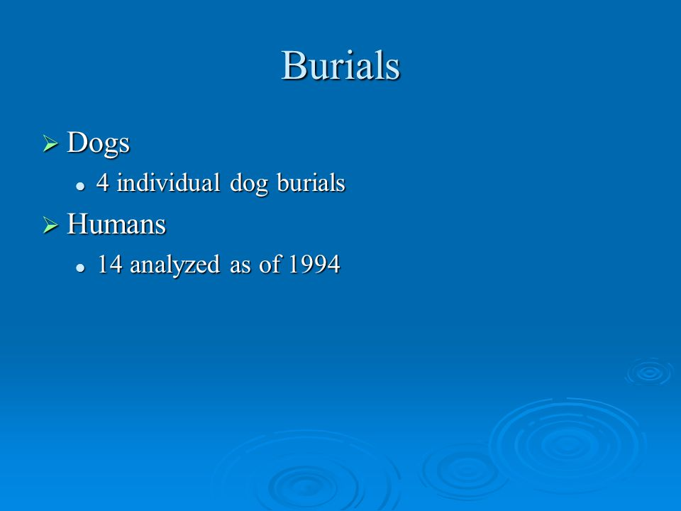 Burials  Dogs 4 individual dog burials 4 individual dog burials  Humans 14 analyzed as of 1994 14 analyzed as of 1994