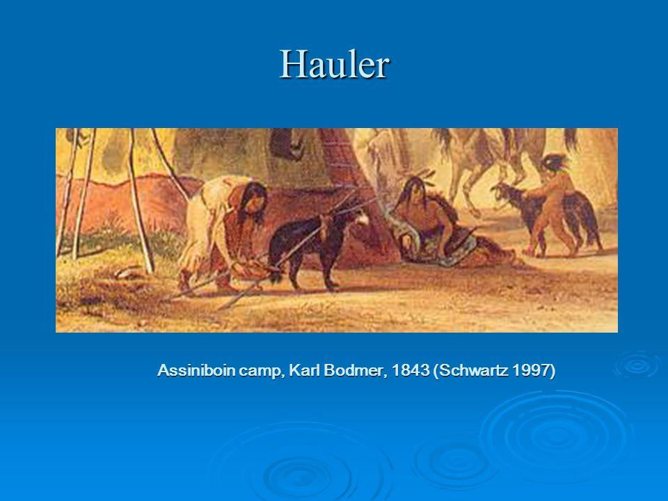 Hauler Assiniboin camp, Karl Bodmer, 1843 (Schwartz 1997)