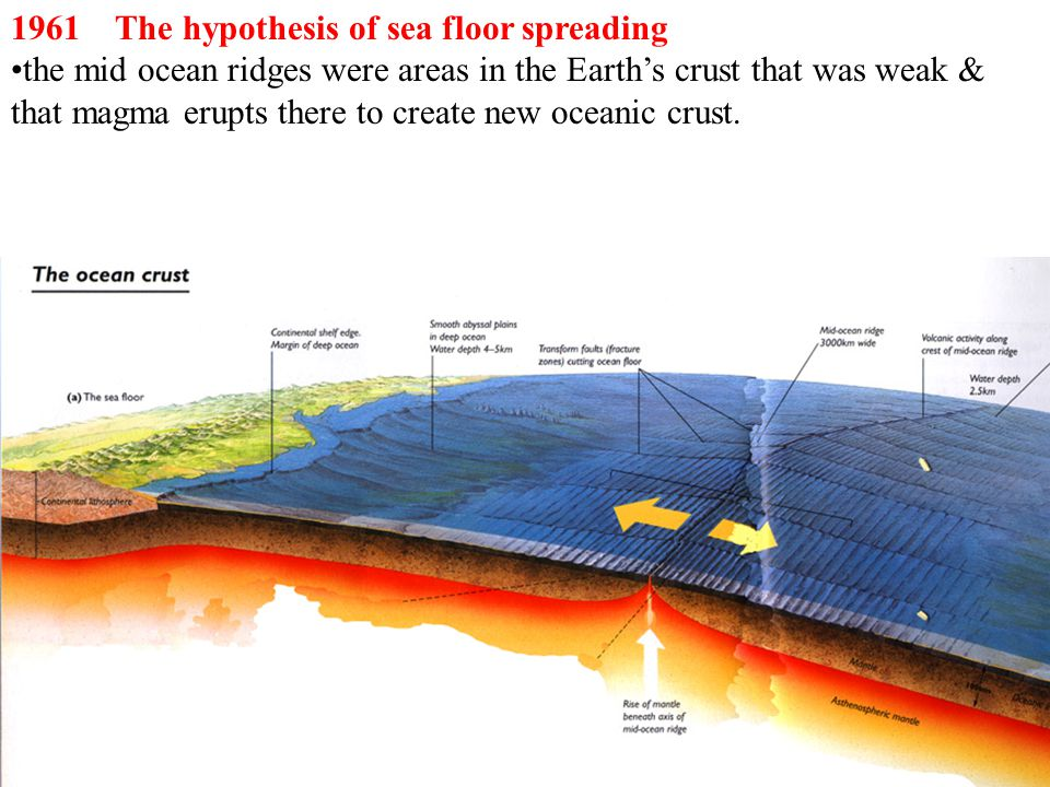 1961 The hypothesis of sea floor spreading the mid ocean ridges were areas in the Earth's crust that was weak & that magma erupts there to create new