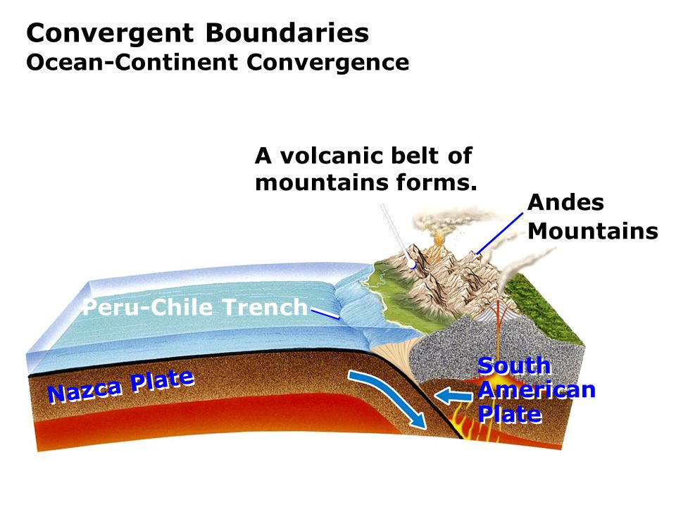 Convergent Boundaries Ocean-Continent Convergence Nazca Plate Andes Mountains South American Plate South American Plate Peru-Chile Trench A volcanic belt of mountains forms.