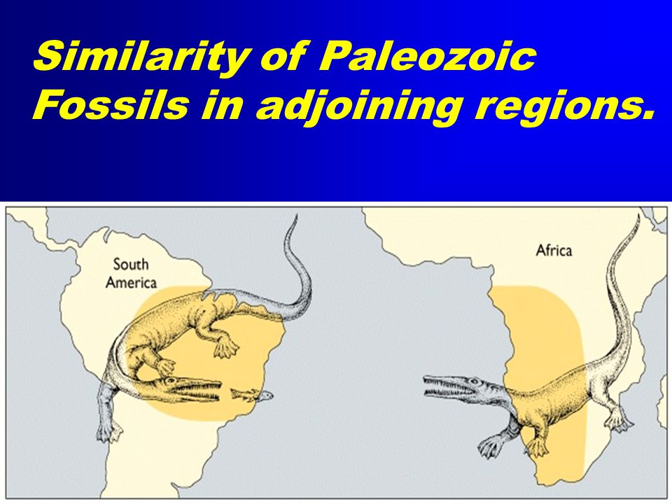 Similarity of Paleozoic Fossils in adjoining regions.