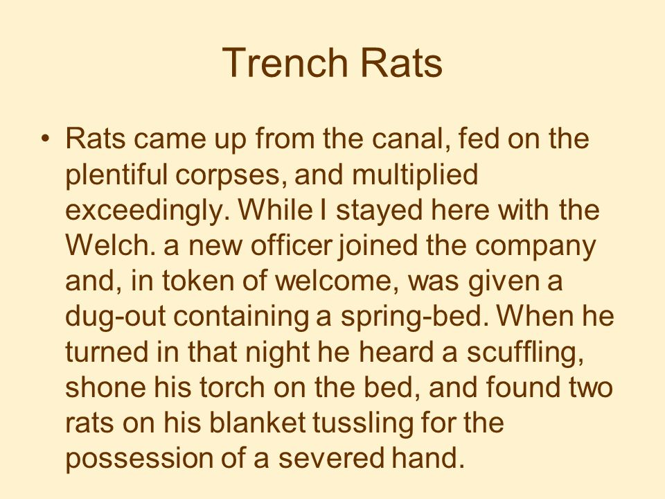 Trench Rats Rats came up from the canal, fed on the plentiful corpses, and multiplied exceedingly.