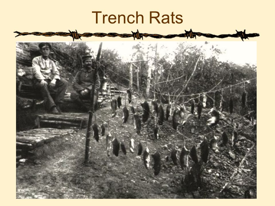 Trench Rats