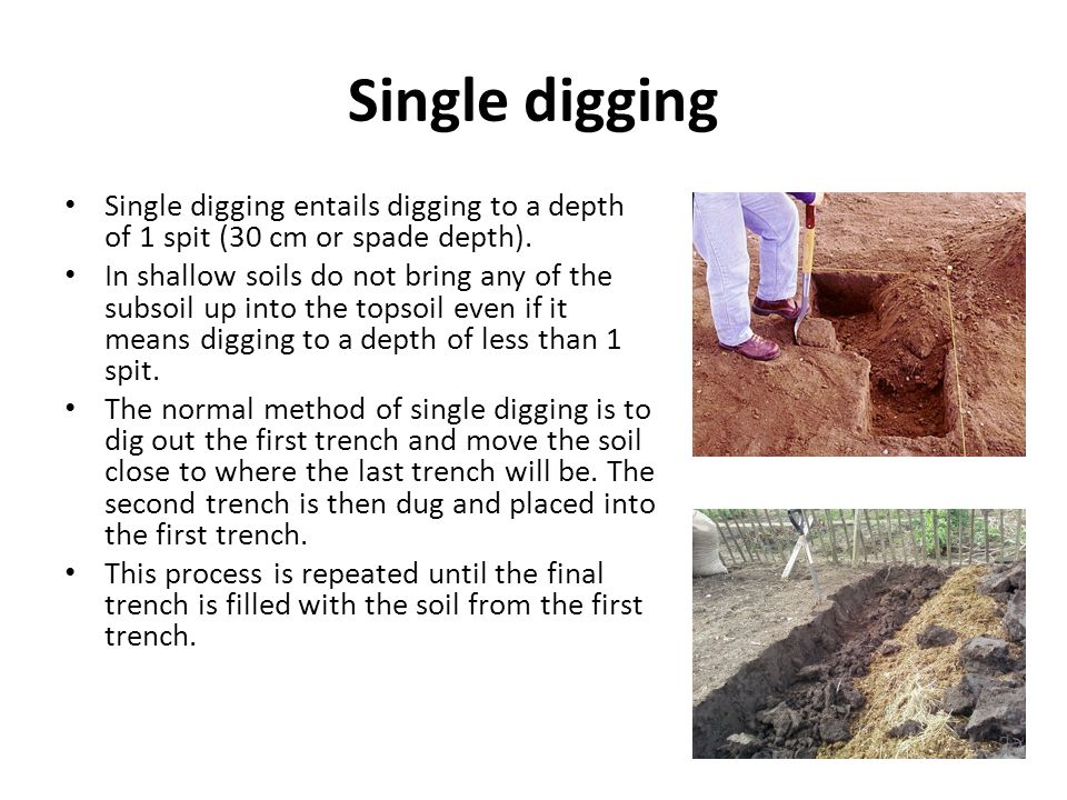 Single digging Single digging entails digging to a depth of 1 spit (30 cm or spade depth). In shallow soils do not bring any of the subsoil up into th