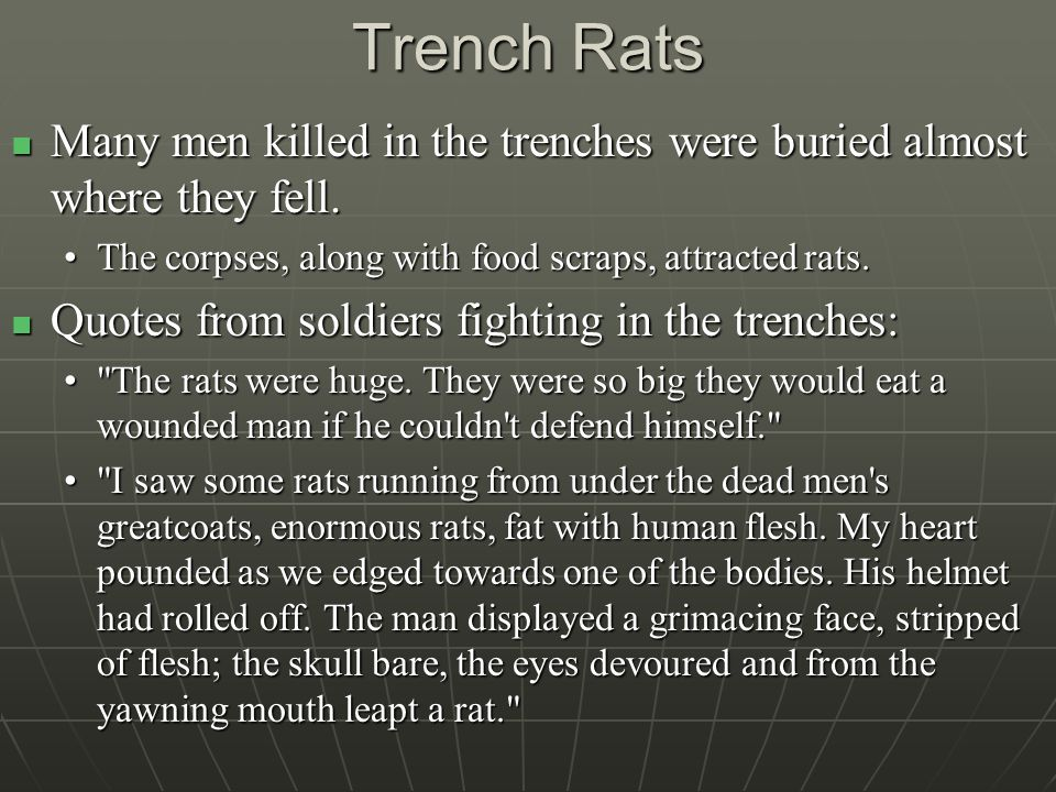 Trench Rats Many men killed in the trenches were buried almost where they fell.