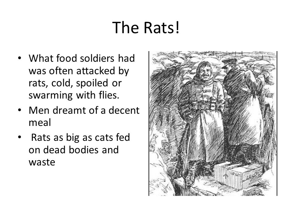 The Rats. What food soldiers had was often attacked by rats, cold, spoiled or swarming with flies.