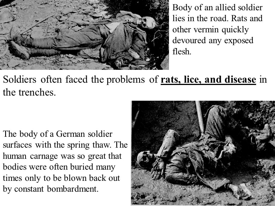 Body of an allied soldier lies in the road. Rats and other vermin quickly devoured any exposed flesh. The body of a German soldier surfaces with the s