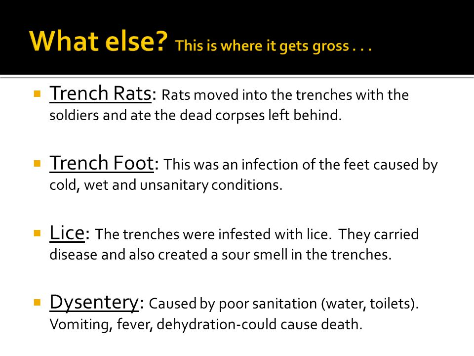  Trench Rats: Rats moved into the trenches with the soldiers and ate the dead corpses left behind.