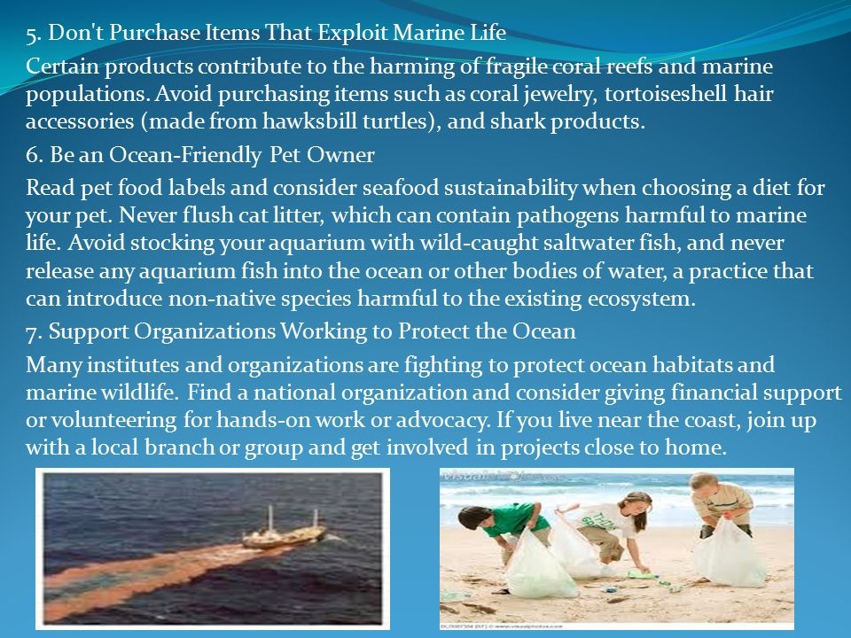 5. Don't Purchase Items That Exploit Marine Life Certain products contribute to the harming of fragile coral reefs and marine populations. Avoid purch