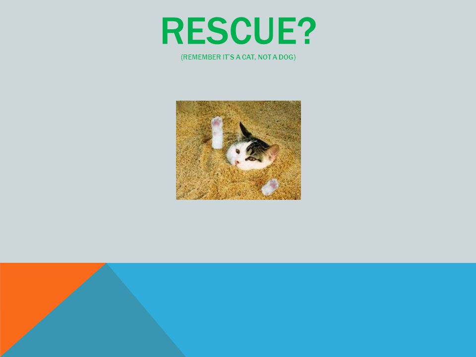RESCUE? (REMEMBER IT'S A CAT, NOT A DOG)