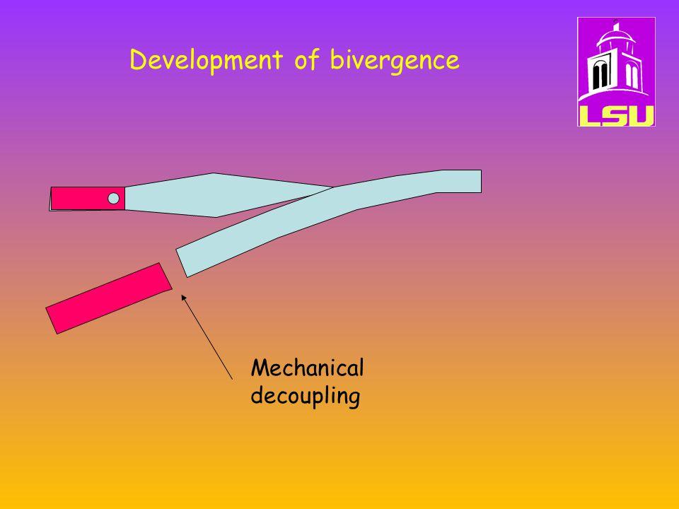 Development of bivergence Mechanical decoupling