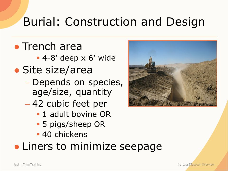 Burial: Construction and Design ●Trench area  4-8' deep x 6' wide ●Site size/area – Depends on species, age/size, quantity – 42 cubic feet per  1 adult bovine OR  5 pigs/sheep OR  40 chickens ●Liners to minimize seepage Just In Time Training Carcass Disposal: Overview